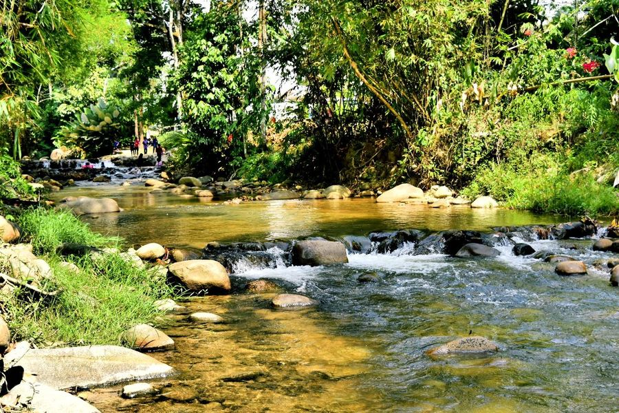 Janda Baik Pahang River Nature Photography Chalet