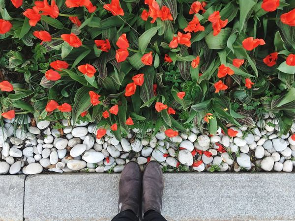 Outdoors Beauty In Nature Personal Perspective Low Section Standing Shoe Directly Above Nature Flowers Tulips Springtime Spring Spring Flowers Spring Has Arrived Spring Into Spring Feetselfie