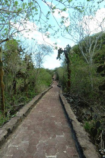 #ecuadorian Galapagos Islands Natural Beauty The Way Forward Tree Diminishing Perspective Day Growth Sky Road