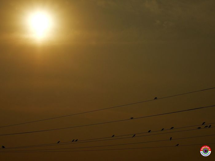 By The End Of The Day Sunset Fever Never End Sunset Fever Never Ends Power Line  Bird Cable Sun Low Angle View Sky Sunset_collection Sunset Sunset Silhouettes
