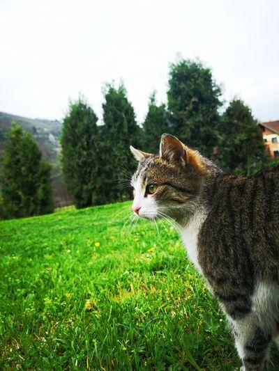 Cat lying on a field