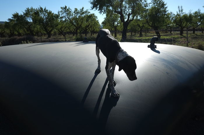 Animal Animal Head  Animal Themes Carefree Countryside Day Dog Domestic Animals Escapism Farm Full Length Getting Away From It All Light One Animal Portrait Side View Sniffing Around SPAIN Water Tank Working Dog