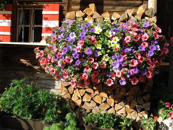 Architecture Beauty In Nature Blooming Built Structure Day Firewood Flower Flower Head Flowers Fragility Freshness Greenhouse Growth Hut Hütte Kaminholz Nature No People Outdoors Plant Sunlight Window Wood