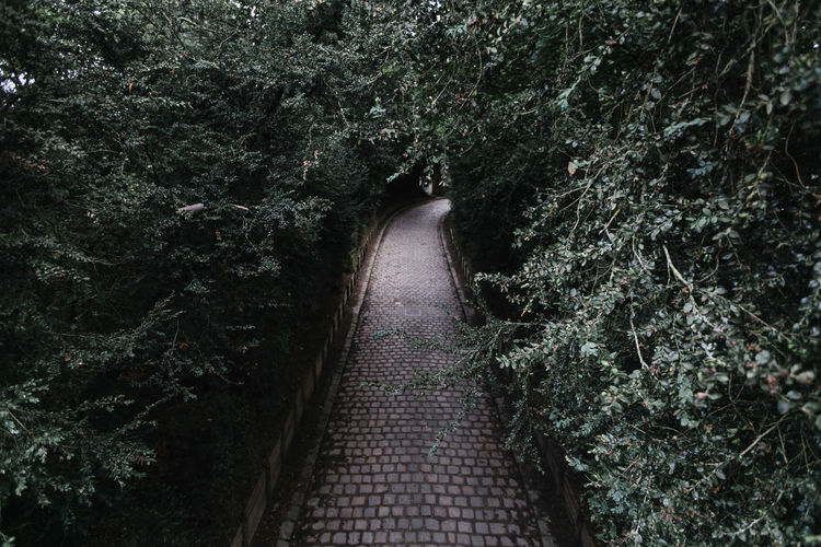 Walkway Amidst Trees