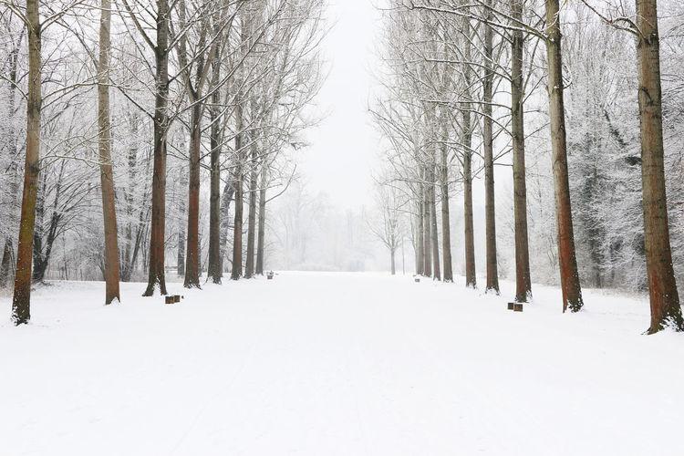 Eyem Best Shots Quite Alone EyEmNewHere Tree Weimar Winter Nobody Park Snow