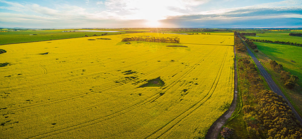 Canola field and agricultural land at sunset in Victoria, Australia - aerial panorama Australia Australian Landscape Landscape_Collection Nature Yellow Flower Aerial Aerial Landscape Aerial View Agriculture Beauty In Nature Canola Canola Field Cloud - Sky Day Drone Photography Farm Farmhouse Field Grass Green Color Horizon Over Land Landscape Landscape_photography Nature No People Outdoors Rural Scene Scenics Sky Sunlight Tranquil Scene Tranquility