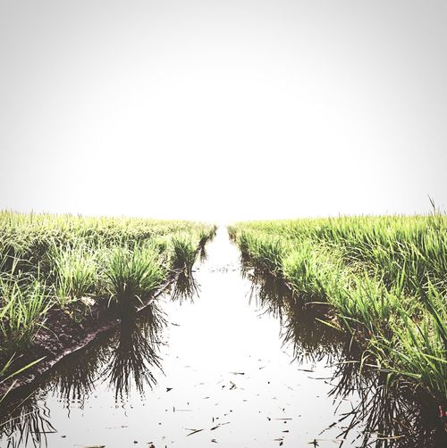 Leads to nowhere. Open Edit Hello World Paddy Field Nature Greens