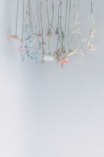 Flowers Flower Head Dry Flowers Dry Flower  Flower No People Backgrounds Full Frame Creativity Textured  Day Art And Craft Outdoors Splattered Glass - Material Built Structure High Angle View Water Nature Close-up Paint Abstract Transparent Wall - Building Feature Messy