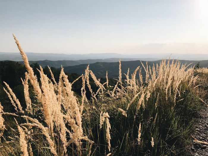 EyeEm Selects Nature Tranquility Tranquil Scene Beauty In Nature Growth No People Scenics Landscape Outdoors Day Mountain Plant Sky Grass Tree Perspectives On Nature