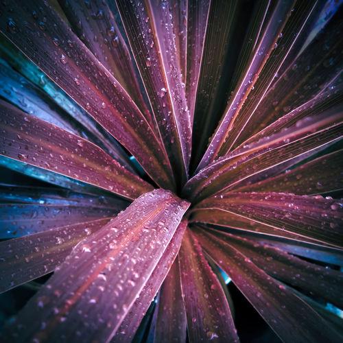 Full frame shot of wet purple flowering plant