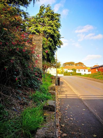 Just Another Corner Trees Foliage Sky Architecture Building Exterior Gate Fence Empty Road Double Yellow Line Asphalt vanishing point Country Road Diminishing Perspective The Way Forward