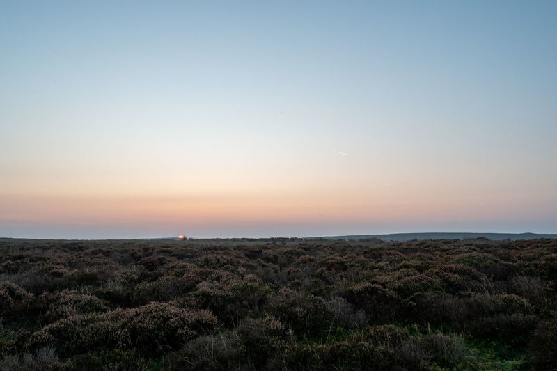 Scenic view of field against clear sky during sunset