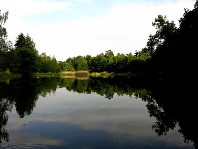 Erholungsgebiet Spiegelung Beauty In Nature Day Forest Growth Lake Mirror Reflection Nature No People Outdoors Reflection Rummensee See Sky Tree Walddsee Water