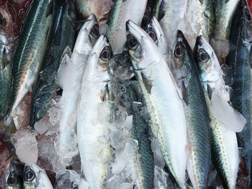 Mackerel Animal Backgrounds Cold Temperature Consumerism Fish Fish Market Fishing Industry Food Food And Drink For Sale Freshness Full Frame Healthy Eating Ice Large Group Of Objects Mackerel Mackerel Fish Market No People Outdoors Raw Food Retail  Retail Display Sale Seafood Vertebrate Wellbeing