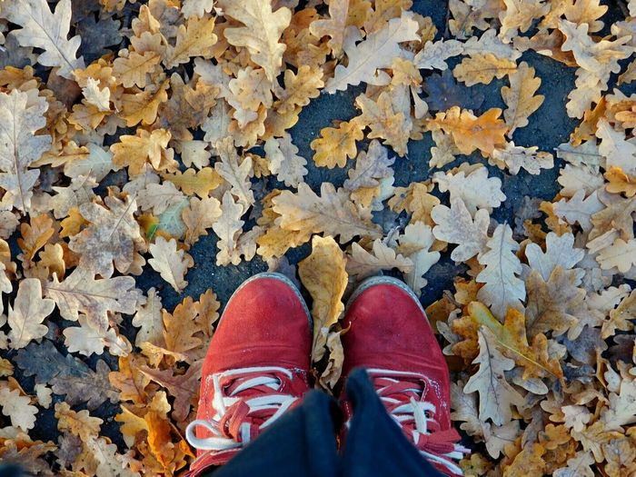 Autumn Standing Personal Perspective Shoe Outdoors Maple Leaf Nature EyeEm Gallery Multi Colored Nature Photography EyeEm Best Shots - Nature EyeEm Best Shots Autumn Colours Autumnbeauty Eyeem Photography EyeEm Nature Lover Autumnseason Cold Temperature Eyem Market Leaf Low Section Calm Autumnshoes Autumnwalk Autumn Collection