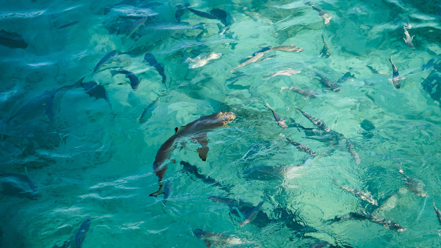 High angle view of bany shark swimming among school of fish abstract business opportunities