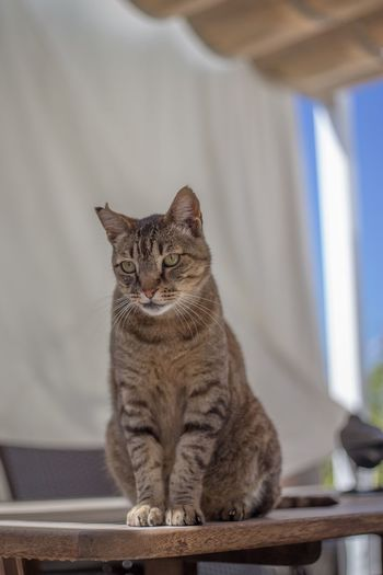 Low angle view of tabby cat sitting at home