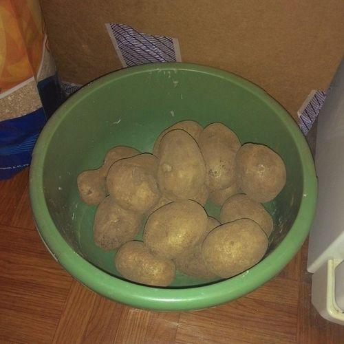 #мирдолжензнатьчтояем #картофель #картошка #овощ #овощи #vegetable #vegetables #2014 #мирдолжензнатьчтояем Vegetables Vegetable 2014 мирдолжензнатьчтояем овощи картошка картофель овощ
