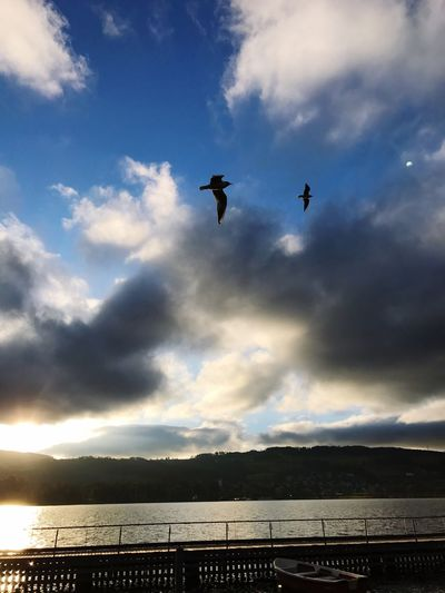 Water Birds Cloud - Sky Nature Outdoors Beauty In Nature