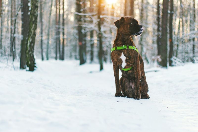 Winter Cold Temperature Dog Snow Animal Pets Nature Tree No People Outdoors Mammal Day EyeEm Best Shots Taking Photo Canon700D EyeEm Best Edits Best EyeEm Shot Travel Exploring Focus On Foreground Nature Forest Forest Walk EyeEm Masterclass Tourist Attraction