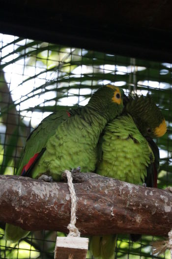 View of birds perching in cage