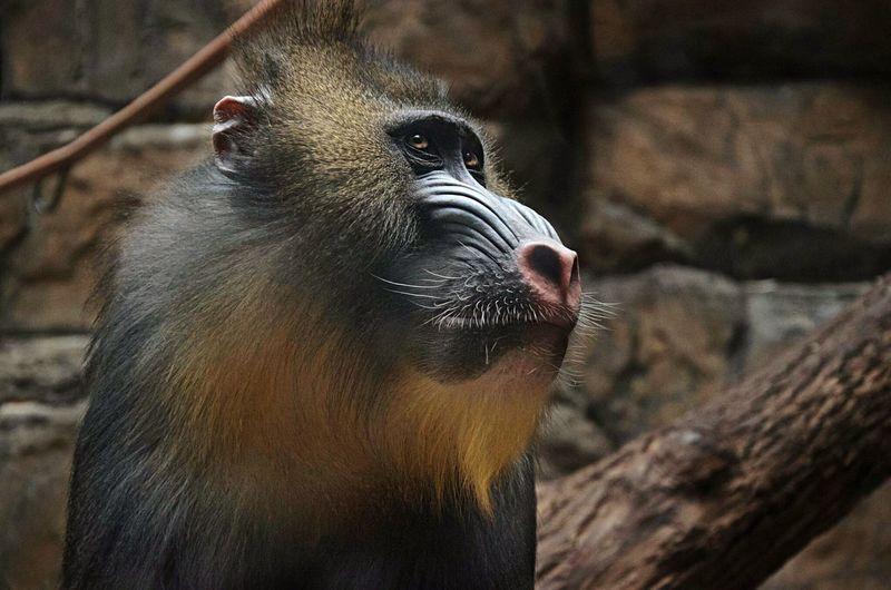 Cleveland Clevelandzoo Zoo Primate Primates Clevelandmetroparkzoo Clevelandmetroparks Ohio Animal Wildanimal