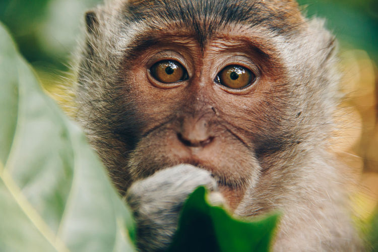 Animal Themes Animal Wildlife Animals In The Wild Close-up Day Leaf Looking At Camera Mammal Monkey Nature No People One Animal Outdoors Portrait Primate