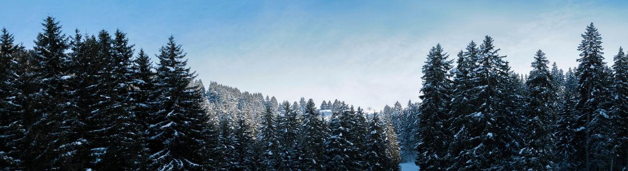 Calm Cold Forest Majestic Mountains Non-urban Scene Outdoors S Scenics Tranquil Scene Tree Winter