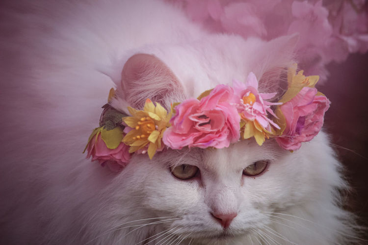 Close-up of cat with pink flower
