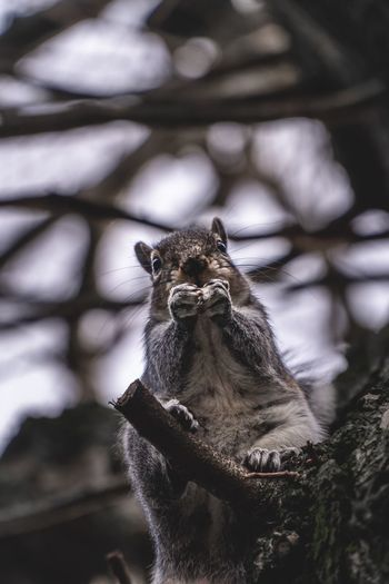 Summer Spring Adorable Nuts Nut Eating Animal Wildlife Animal Themes Animals In The Wild Animal One Animal Vertebrate No People Focus On Foreground Tree Mammal Close-up Day Nature Looking Away Squirrel Looking Outdoors Zoo Zoology