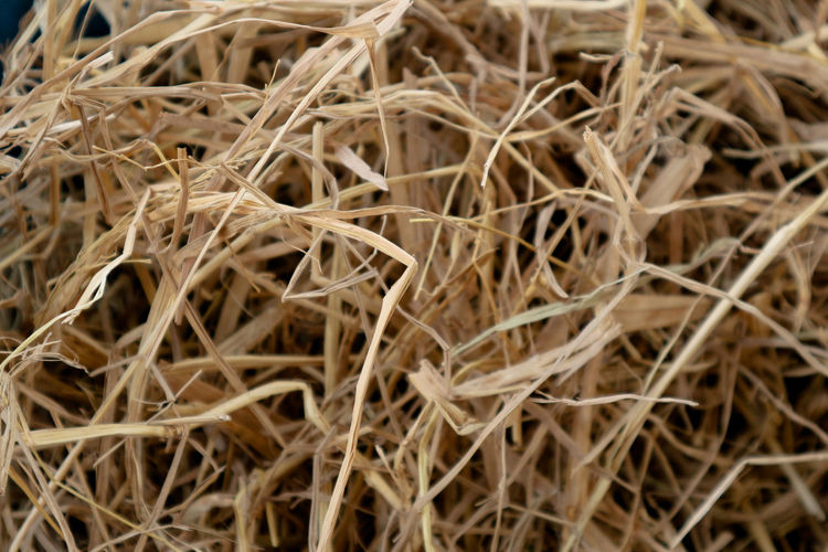 Plant Fibers Animal Feed Backgrounds Full Frame Nature Rice Straw Straw Was Crushed