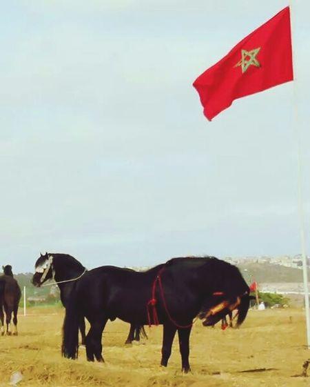 HorseNAround Morocco I Love Animals