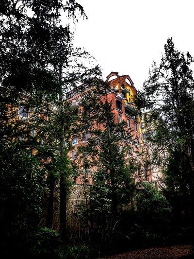 Via Mozart, Milano, Febbraio 2018 Hdr_Collection City Garden Low Angle View Tree