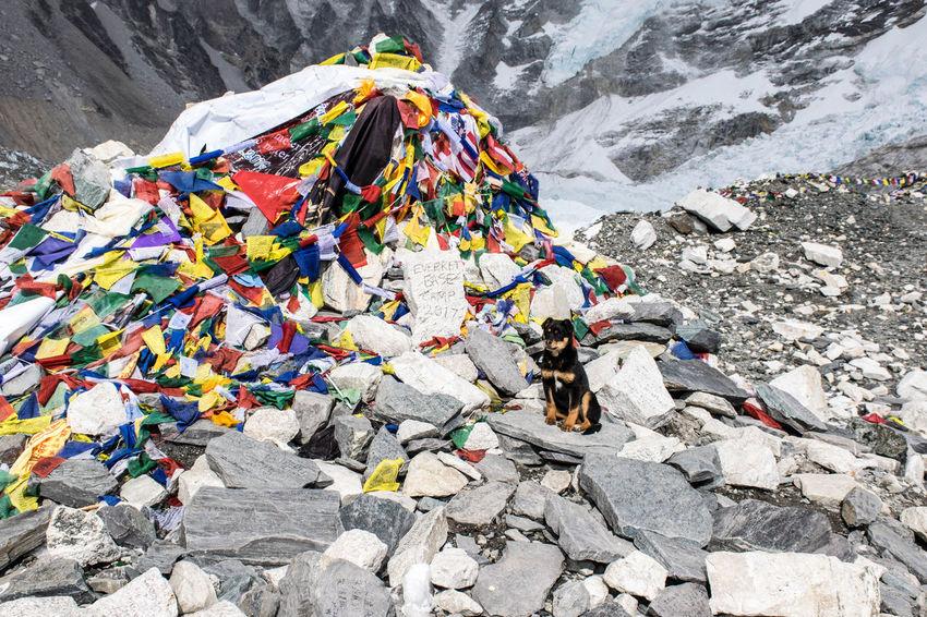 Trekking Nepal Lost In The Landscape Nepal Trekking Adventure Dog Everest Base Camp Everest Base Camp Trek Mountain Nature Outdoors
