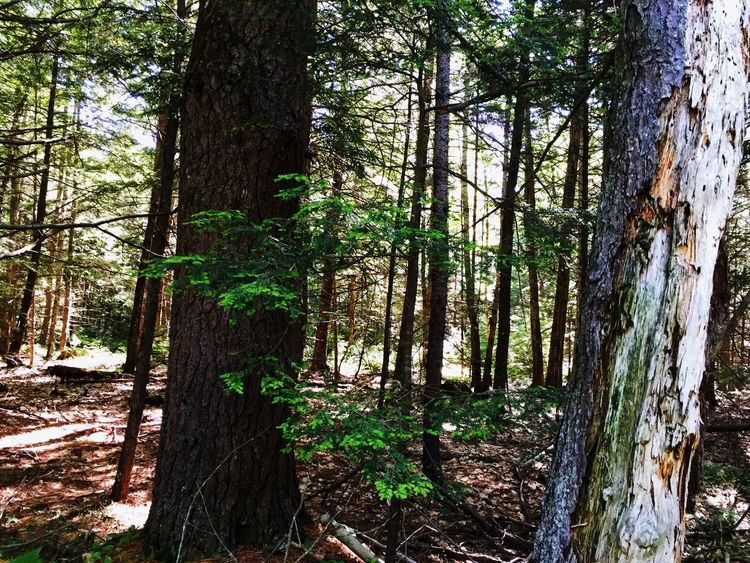 Light And Shadow Sunny Day Trees Summer Taking Photos Maine