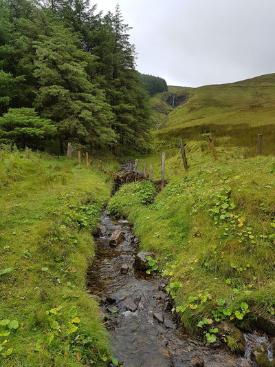 River stream in Gleniff horseshoe drive, Sligo, Ireland. Tree Water Sky Grass Green Color Landscape