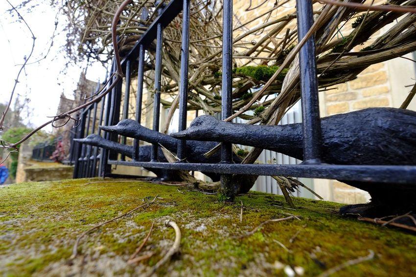 Fence Ducks Ducks In A Row Wall