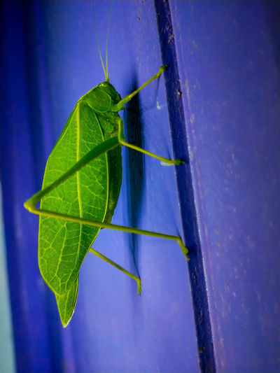 Close-up of insect on leaf against blue wall