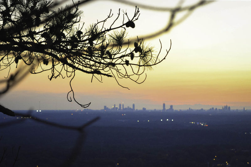 Close-up of silhouette tree in city at sunset