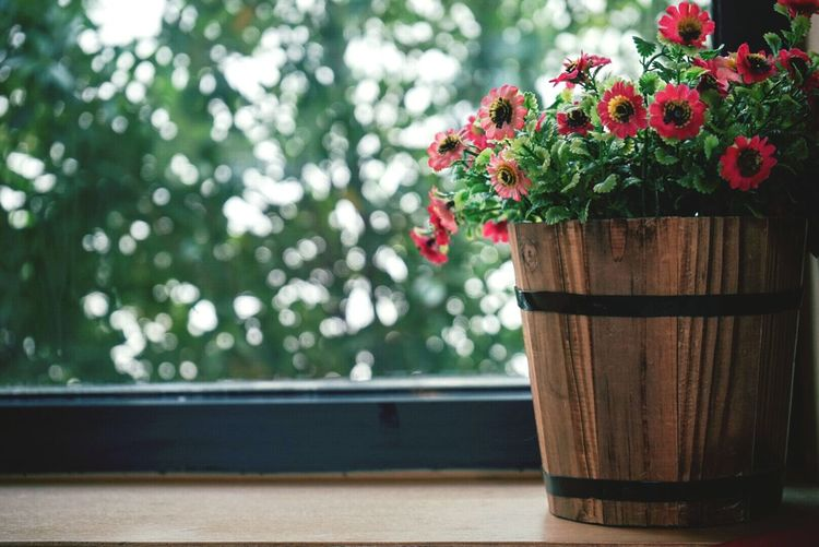 Close-up of flower pot