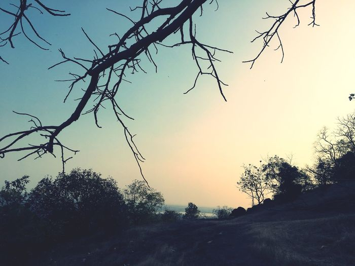 🌅 sunset🌅 Scenics Sky No People Beauty In Nature Outdoors Tranquility Landscape Silhouette Branch Sunset Clear Sky Nature Bare Tree Tree