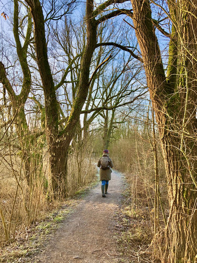 Rear view of woman walking on footpath amidst bare trees