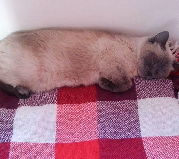 Он думает, чтоон— король, нона самом деле всего лишь кот. 😸💖👑 Стивен Кинг. Cat Cat_dog кусич король Morning Winter кот Could