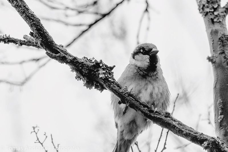 Bird Animals In The Wild Perching Animal Themes One Animal Branch Animal Wildlife Tree Nature Focus On Foreground Outdoors Day No People Low Angle View Winter Snow Beauty In Nature Bare Tree Mourning Dove Close-up First Eyeem Photo First Eyeem Photo