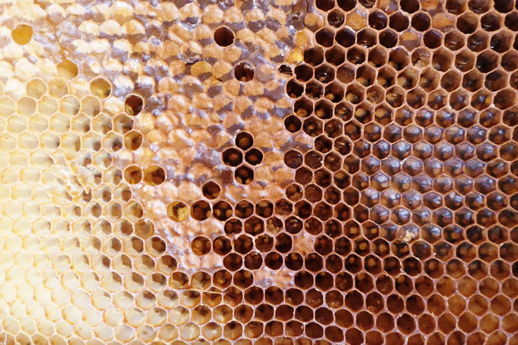 Full frame shot of bee hive