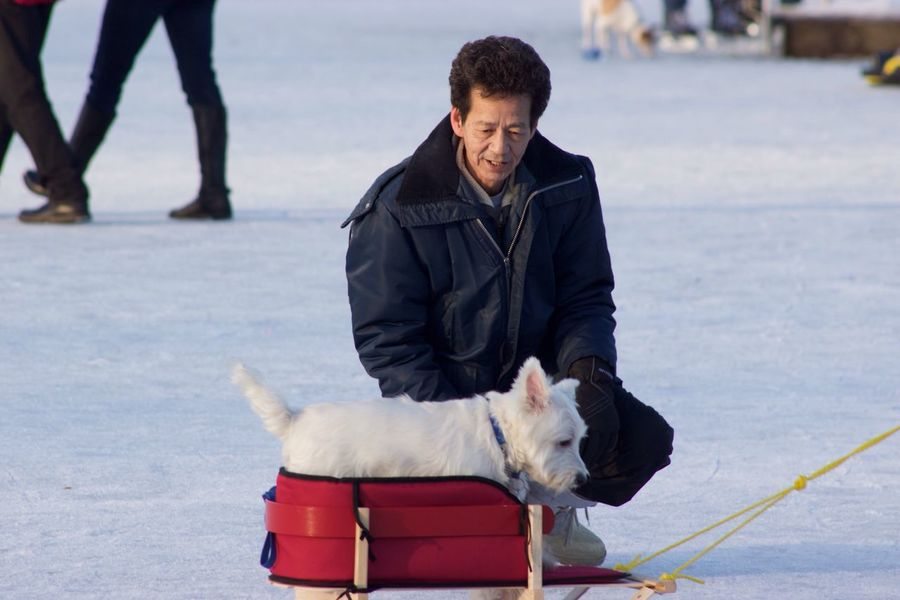 Dog on a Sled Having Fun Domestic Animals Winter Leisure Activity Dogslife Pets Outdoors Cold Temperature Lifestyles Trout Lake Vancouver British Columbia, Canada