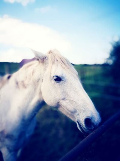 She is a beaut Horse One Animal Close-up Focus On Foreground Horses Horse Photography  EyeEm Best Shots Eyemphotography Eyem Best Shots Nature_collection Phonecamera Green Outdoors Ireland🍀
