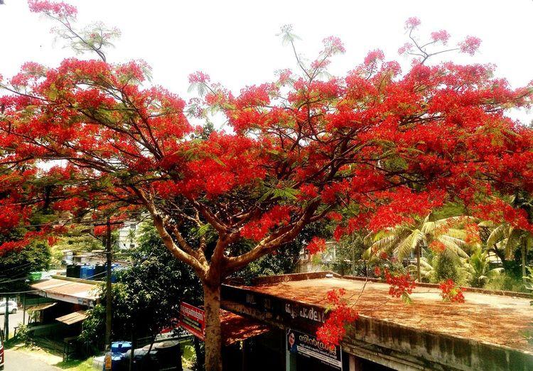 Kerala city
