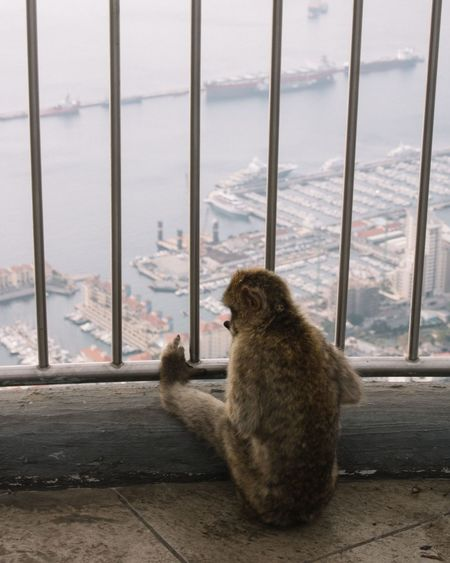 Close-up of cat by window against sea