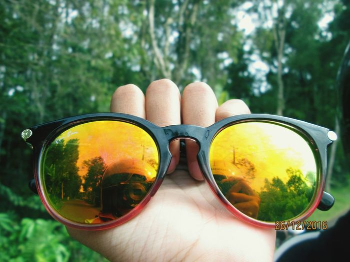 pine forests Pine Forests Pine Tree Forest Holiday Vacation Trip Sunglasses Tree Summer Day Eyeglasses  Outdoors Human Body Part Nature Close-up People